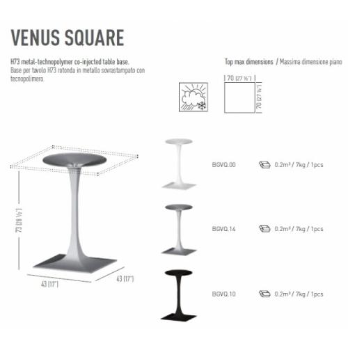 Venus Square